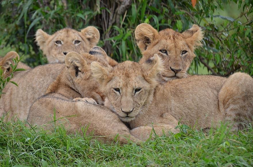 Agrémenter ses vacances au cœur du Kenya par de belles découvertes
